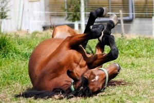 horse_mare_animal
